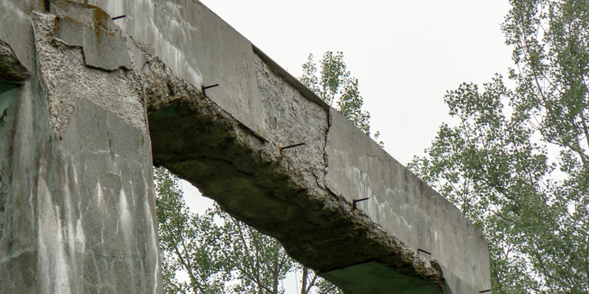 """""""Muchołapka"""" w okolicy elektrowni, Ludwikowice Kłodzkie. 2007 r."""