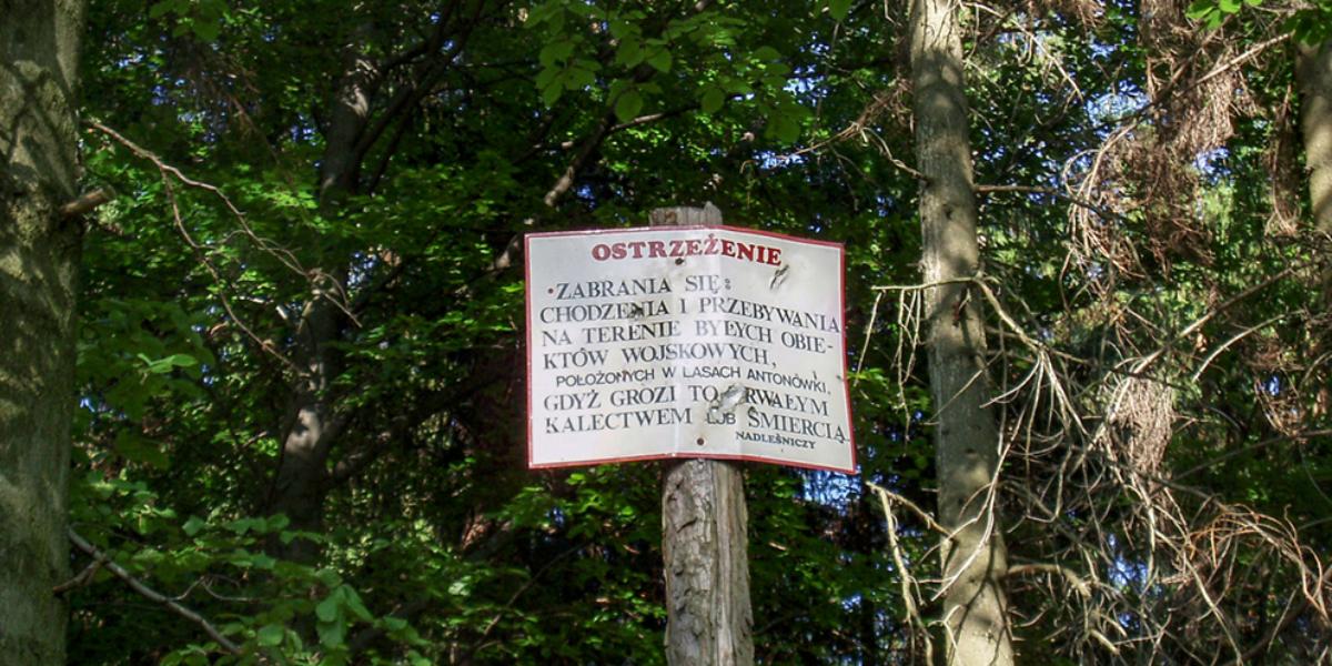 W lesie Antonówki. 2008 r.